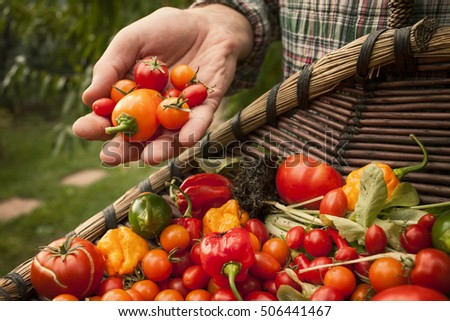 Freshly picked red vegetables in a garden