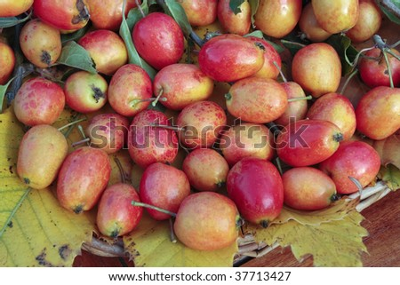 freshly picked ripe crab apples