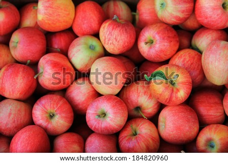 Freshly picked ripe Red Apples  - stock photo