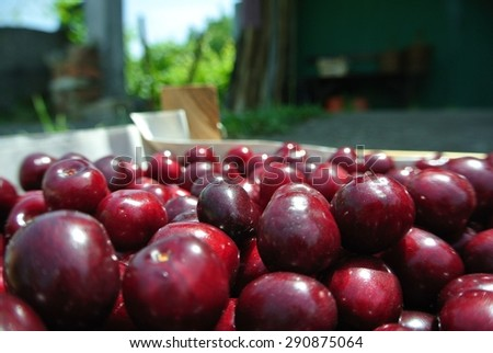 Freshly picked ripe red cherries in a wooden crate, in an orchard, on a sunny day. Concept of organic farming; fresh, natural, healthy, unprocessed fruit. - stock photo
