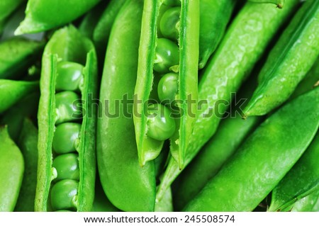 Freshly picked sweet  green peas.  peas in open pods - stock photo