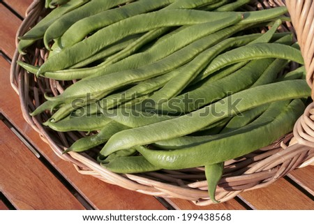 Freshly picked up broad beans - stock photo