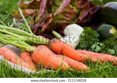 freshly picked vegetables and herbs on rustic background - stock photo
