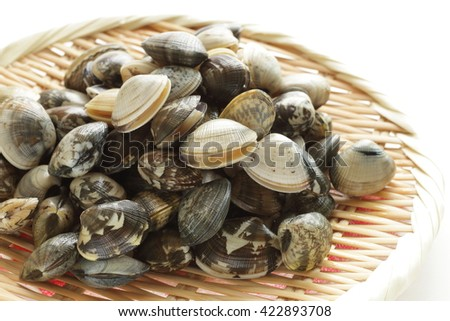 freshness clam from japan on bamboo basket - stock photo
