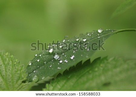 freshness of nature water drops on a leaf