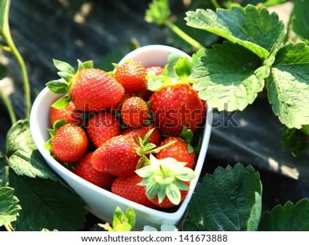 Freshness strawberry on heart shape bowl - stock photo