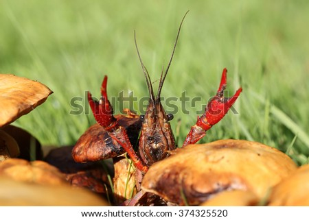 freshwater crayfish - stock photo