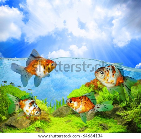 Freshwater fish - stock photo