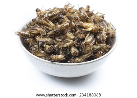 Fried crickets is the food in thai. - stock photo