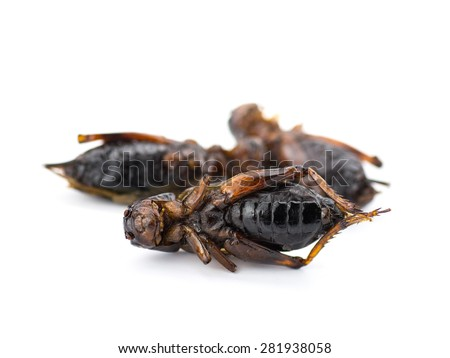 Fried insects isolated on white background - stock photo
