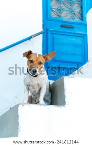 Friendly dog by the traditional door, Lefkes village, Paros - stock photo