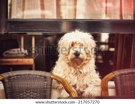 Friendly dog sitting at the window - stock photo