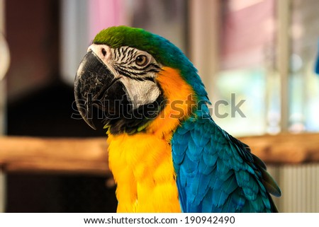 Friendly Parrot Macaw Beautiful Colors. - stock photo