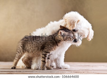 Friends - small dog and cat together - stock photo