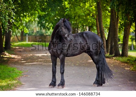 Friesian horse standing outdoors - stock photo