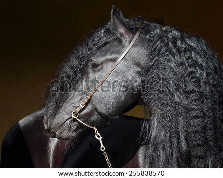 Friesian horse with long mane - stock photo