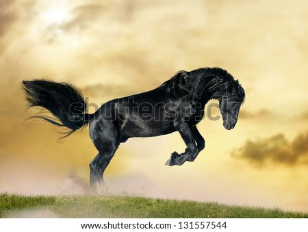 friesian stallion in sunset - stock photo
