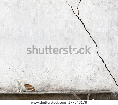 frighten cat looking at  cracks in wall - stock photo
