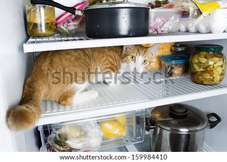 Frightened cat in the refrigerator - stock photo