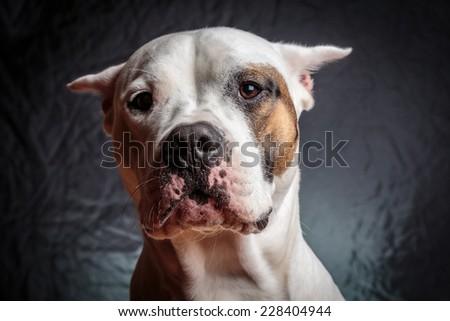 Frightened dog - stock photo