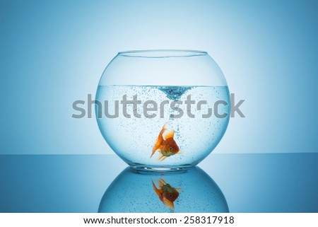 frightened goldfish in a fishbowl - stock photo