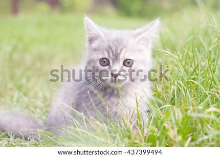 frightened kitten - stock photo
