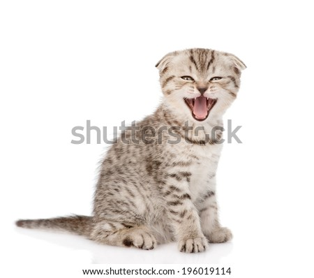 Frightened kitten looking at camera. Isolated on white background.  - stock photo