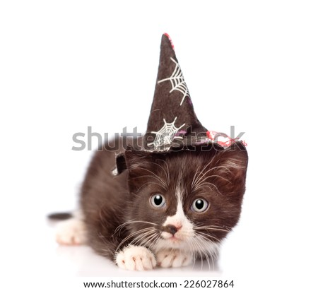 frightened kitten with witch hat for halloween. isolated on white background - stock photo