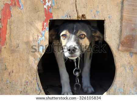Frightened small dog in a kennel - stock photo