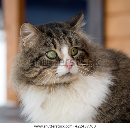 frightened/surprised fat cat
