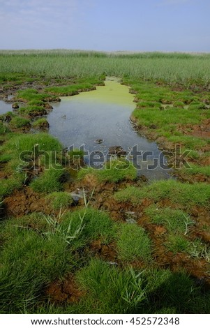 frisian nature landscape - stock photo