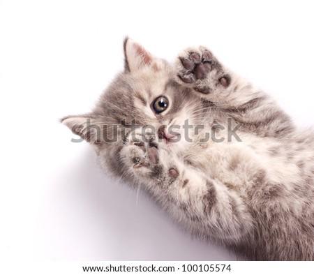 frisky kitten isolated on white - stock photo