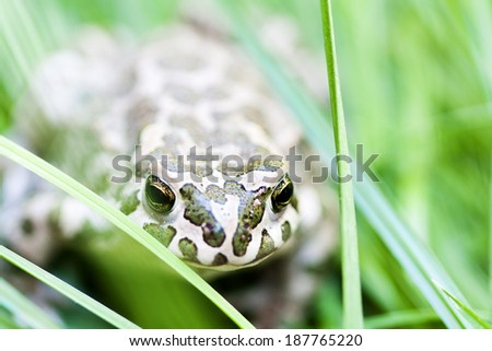frog among a grass - stock photo