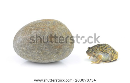 Frog and Stones isolated on white background