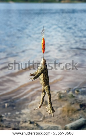Frog caught on wobbler. Funny case on a fishing trip.