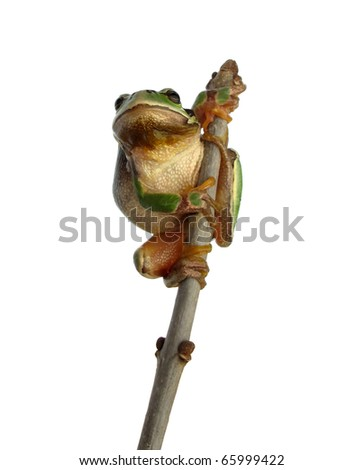 Frog climbed on the top - stock photo