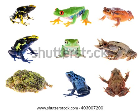 Frog compilation. Red-eye tree frog, Blue dyeing dart frog, The false tomato frog, The long-nosed horned frog, Green waxy monkey leaf frog, Bony-headed toad, The Mossy Frog. - stock photo