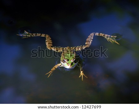 Frog floating on water - stock photo