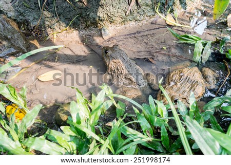 Frog in Jungle - stock photo