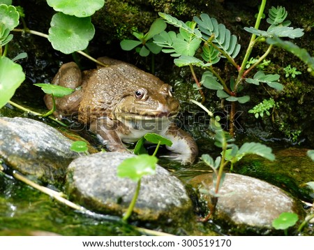 frog in nature - stock photo