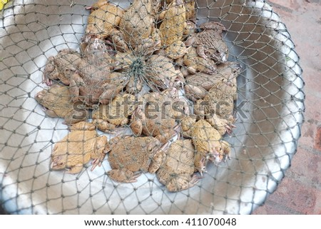 Frog in the basin for sale - stock photo
