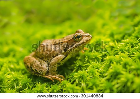 Frog in the grass - stock photo