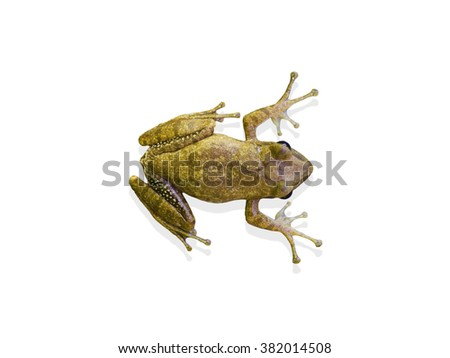 frog isolate and white backgrounds  - stock photo