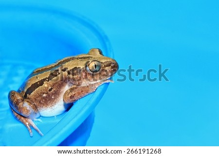 Frog of Color - Wild Reptile Background - Thinking Blue