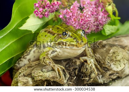 Frog On A Tree Branch - stock photo