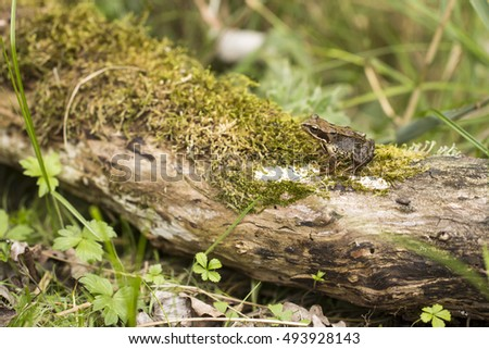 Frog on A Tree Trunk Covered with Moss