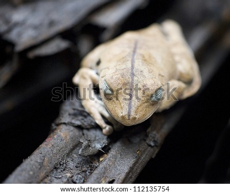 Frog on branch, close-up
