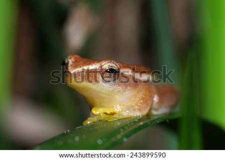 Frog on green leaves