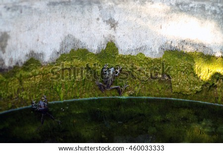 Frog on Mossy Wall