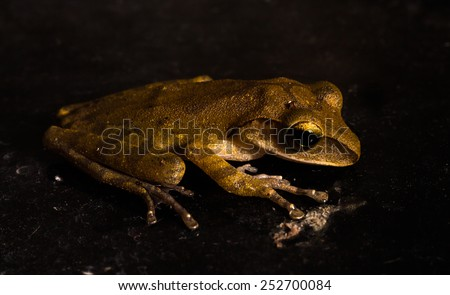 Frog on the black background